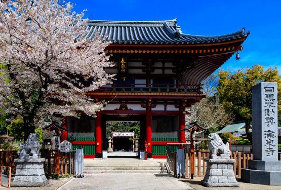 7 Tips Belajar Bahasa Jepang Untuk Pemula Hingga Mahir