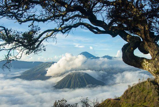 Bahasa Jawa Bahasa Daerah Dengan Perkembangan Paling Pesat di Nusantara! Berkuda di Gunung Bromo