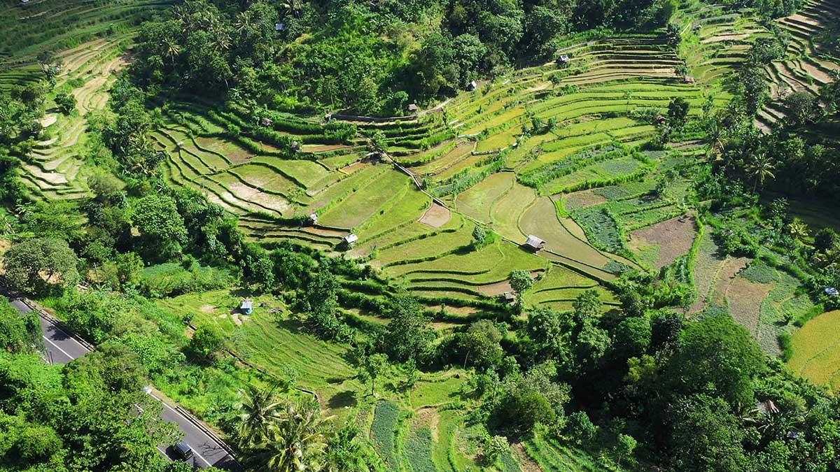 desa di pulau dewata